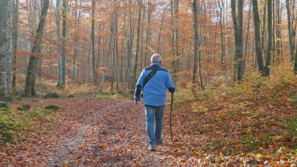 Man walking in woods with a walking stick